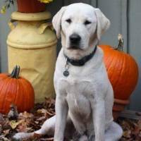 Bentley enjoying a fall day