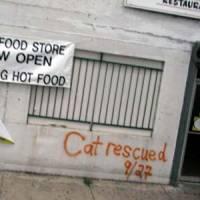 Katrina Pet Rescue