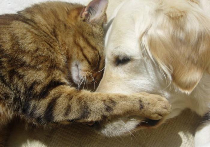 home pet euthanasia veterinary house call service bc